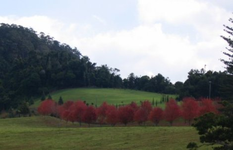 Red autumn trees near Kangaroo Valley
