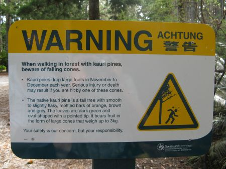 Deadly pine cones and other dangers on Fraser Island