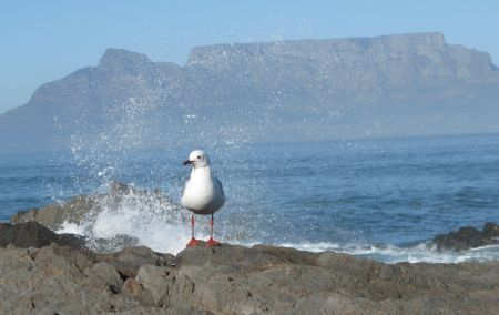 Bloubergstrand in Cape Town