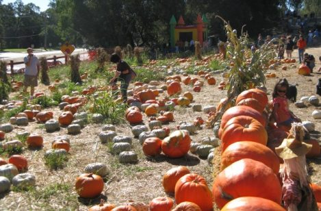 Halloween horror and pumpkins in California