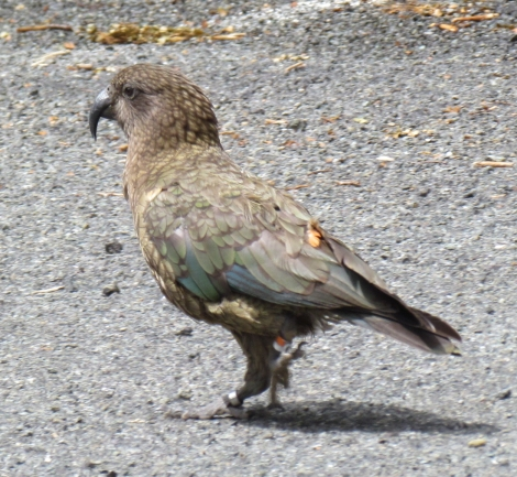 The Chasm and a couple of Kea parrots in New Zealand