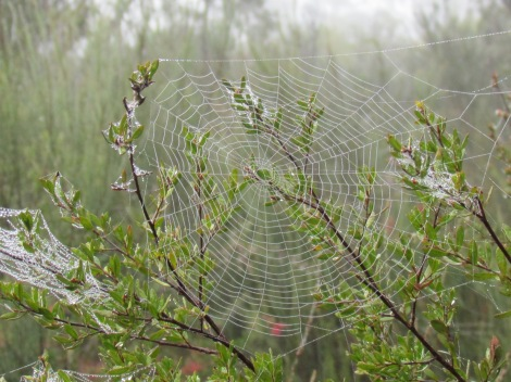 Cobwebs in the mist
