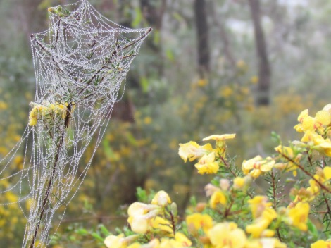 Webbed twig and yellow flowers